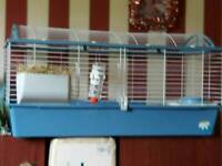 2 x 18mnth old guinea pigs & cage