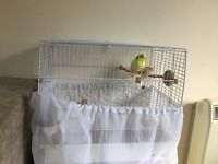 Budgie with cage and food etc