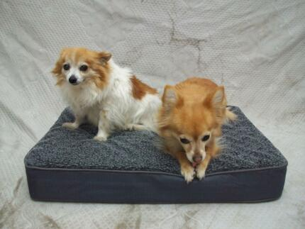 NEW Four Seasons Orthopedic Dog Bed - DIRECT TO PUBLIC! Scoresby Knox Area Preview