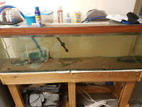 4ft 140l aquarium with homemade stand glass slides and 4ft t8 light