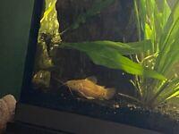 Multiple fish for sale (aquarium not included)