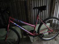 ladies maxima jazz bike