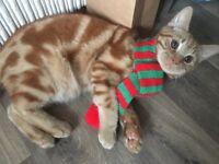 Missing ginger cat