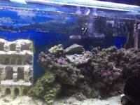 Marin fish tank 4 feet