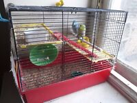 Beautiful Budgies with Cage for sale