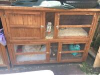 Guinea pigs x2 girls plus double hutch