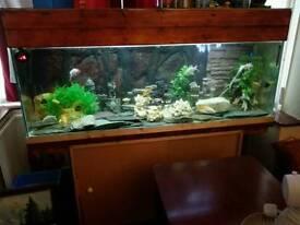 5ft..Fish tank..full set up