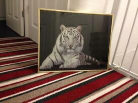 Tiger picture with gold frame