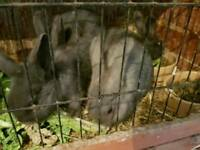 Bqby rabbit