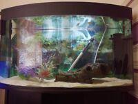 Aquarium tropical fish tank and stand