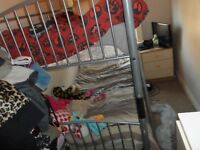 BUNK BEDS WITH BOTH MATTRESS IN EXCELLENT CONDITION DELIVER FREE LOCAL MOVING ABROAD