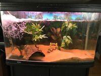 Aqua one Ar850 165 ltr fish tank aquarium