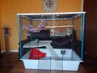 Large Rat cage with toys for Sale!!!!!!!!!!!!!!!!!!!!!!!!!!!!