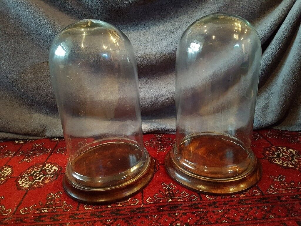 hand blown glass bell jars for display (seconds)