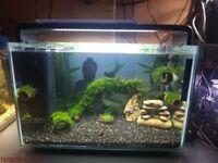 Superfish Home 60 aquarium LED
