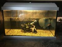 Fish tank (60 litres) with fish snd all accessories