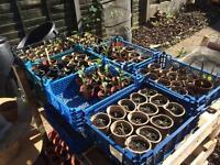 Sow4 Gardening Workshop