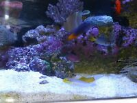 Marine tank fish and corals for sale