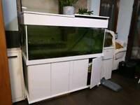 5ft x 2ft x 2 ft aquarium fish tank