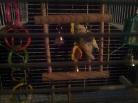 parakeet with cage toys ect