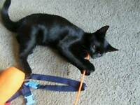 Small black cat missing from crossford