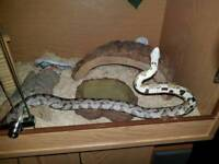 Snake and viv