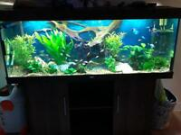 fish tank with all equipment you need to run this set up including live stock