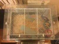 2 Female Roborovski Hamsters