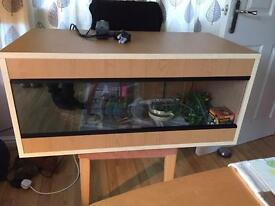 New vivarium and baby bearded dragon