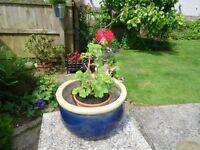 Garden pots in good condition at £10 each.