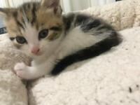 Kitten still available
