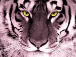 Wild_animal_gifts