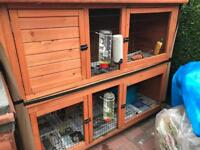 3x Guinea pig girls and double hutch