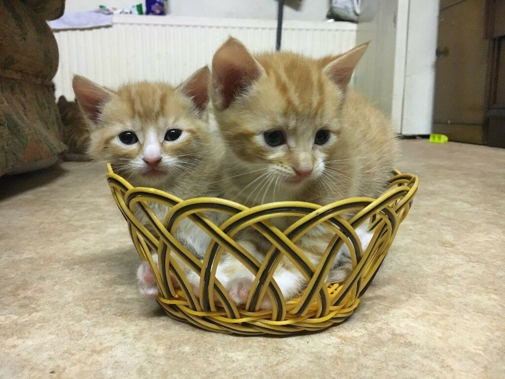Adorable Kittens are ready to make you Happy
