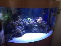 Marine fish tank fluval 190