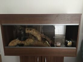 Vivarium for reptile