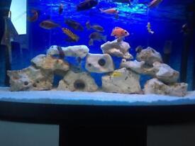 ocean rock coral rock ph buffer