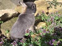 🐰 Bunny 🐰