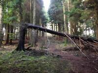 Wanted - small piece of Land or Wood, within 10-15 mile radius of St Agnes