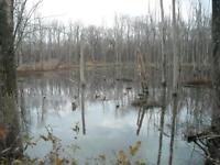 Looking for duck and geese hunting area's