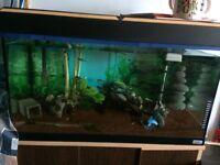 Fish Tank L@@K