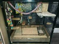 Large small animal, rodent cage