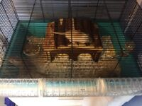 Pair of Gerbils,with Gage and beding and food .My daughter has grown out of them