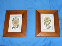 2 sunflower pictures in gorgeous frames