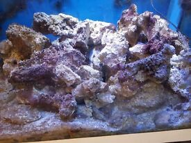 80kg Mature Live Rock - No Aips, from FOWLR