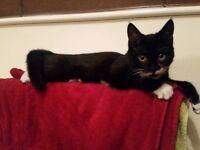 Missing Cat - black and white, Dromara