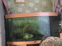 Large fish tank for sale. Needs new light bulbs in lid. Had four five years easy to maintain