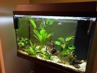 Tropical fish tank. Jewel 70L
