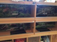 4x 3ft vivariums with thermostats and heat mats4x 4ft vivariums with thermostats and heat mats