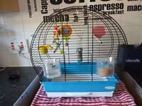 baby budgie complete with cage